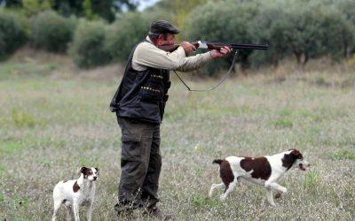 Un casseur et ses chiens